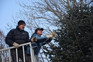 Abräumen des Christbaum am Nikolaiberg am 21.01.2017